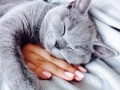 Гороскоп: совместимость мужчины и женщины знака Кот в любви и браке