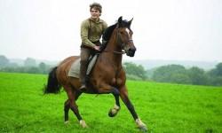 Мужчина Весы в год Лошади: характеристика по гороскопу в любви